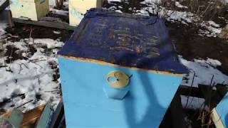 Пчелосемья зимой средина февраля 7 улочек на 2 корпуса Рут