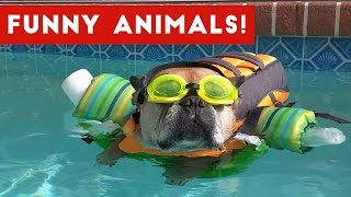 Hilarious Pet Bloopers You Need To Watch Compilation 2017 | Funny Pet Videos