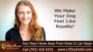 Dog Training Las Vegas | Call (702) 425-5470 | Las Vegas Nv Dog Training