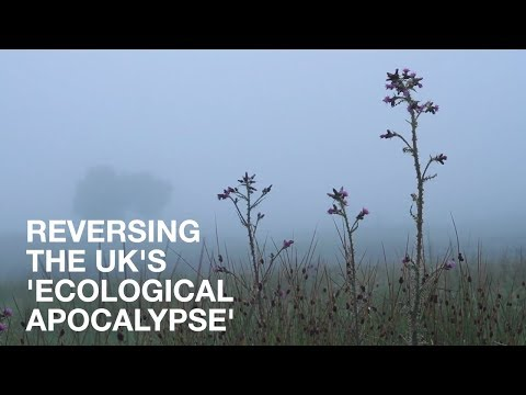 News in Brief: Reversing the UK's 'Ecological Apocalypse' | Lush Times
