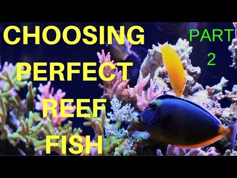 REEF SAFE FISH FOR THE MIXED REEF AQUARIUM (COMMUNITY FISH PART 2)