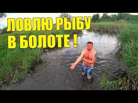 ЛОВЛЮ РЫБУ РУКАМИ В БОЛОТЕ! / Виталий Зеленый