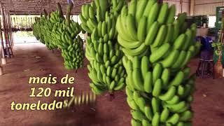 LUIZ ALVES 59 ANOS
