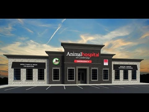 Animal Hospital Of Cambridge Emergency Walk In