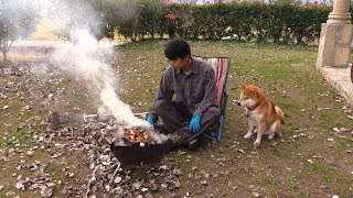 柴犬タロウと家族の日記。 庭の落ち葉で焼き芋。 Eat baked sweet potato with Shibe.