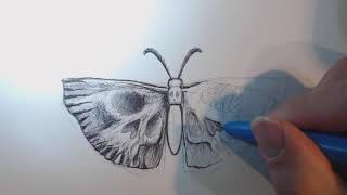 Beanie Draws A Tattoo Design of A Moth Butterfly with Skull Wings Using Ballpoint Pen