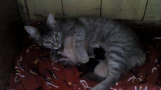 МОЯ КОШКА с котятами!