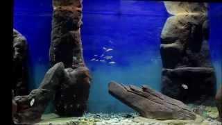 Afrykarium-Oceanarium ZOO WROCŁAW - pierwsze ryby i koralowce