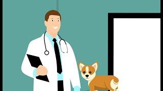 Vet Practices in Rotterdam | Animal Vet Practice Cappelle aan den Ijssel