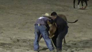 Sometimes The Bull Wins, Monte & Billy Double Mugging, 2016 All American Rodeo