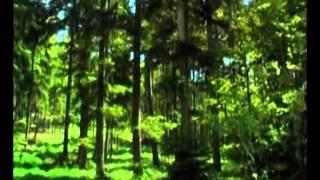 Мудрец Йога Васиштха   Обучение Рамы и полное понимание истинного абсолюта  101