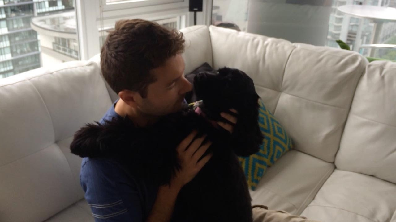 Blind Stray Dog Sees Owner For The First Time