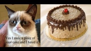 Grumpy Cat Stole A Piece Of Siko's German Chocolate Cake