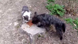Как кошка с собакой еду делили