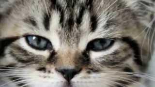Подборка смешных кошек и собак! Очень веселое и позитивное видео!