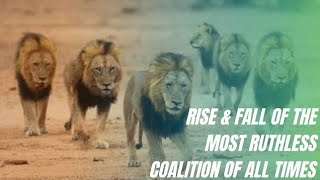 THE MAPOGO LIONS - RISE & FALL OF THE MOST FAMOUS LION COALITION