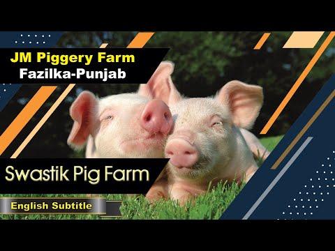 JM Piggery Farm ll Keriyan, Fazilka-Punjab ll Swastik Pig Farm