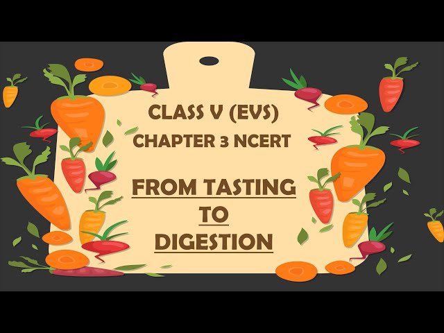 NCERT Class 5 EVS Chapter-3 (Part-1) From Tasting To Digesting with हिंदी explanation | Class5 EVS