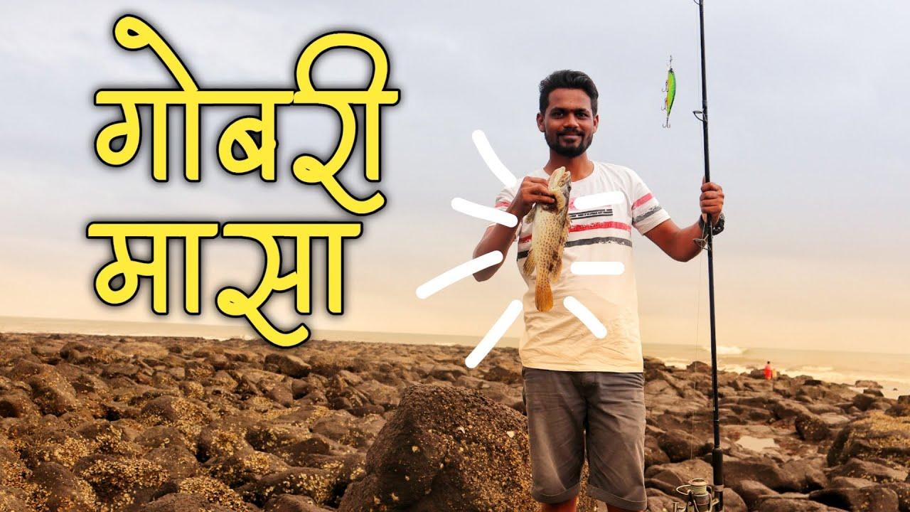 गरीने मासे पकडताना सापडला गोबरी मासा   Fishing At Konkan, Kelshi Dapoli (Konkan)
