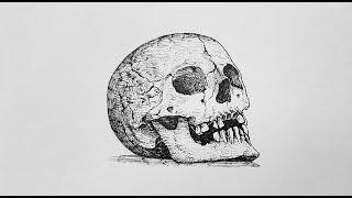 펜으로 두개골 그림 그리기/Drawing cranium…