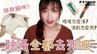 寵毛網/貓與香菜:消滅跳蚤的方法!