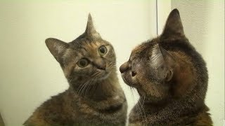 Funny Pets & Animals vs Mirrors Reaction Videos | Video Compilation #4