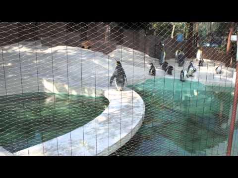 大阪市 天王寺動物園 ペンギン  Osaka City Tennoji Zoo 2012/02/19