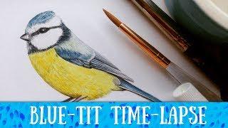 Blue Tit Time-lapse ・ WATERCOLOUR ・