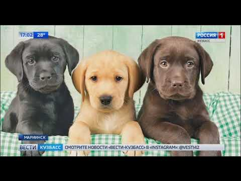 Мошенница из Мариинска продавала несуществующих щенков