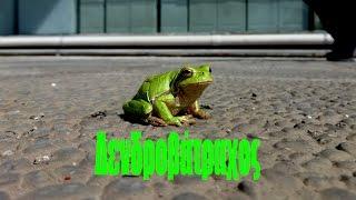 Δενδροβάτραχος