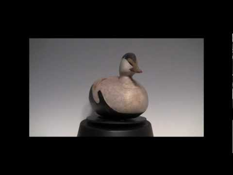 Early eider from Maine