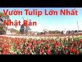 Ngắm Vườn Hoa TuLip Lớn Nhất Nhật Bản|| HoangPhuc JP- Cuộc Sống Nhật
