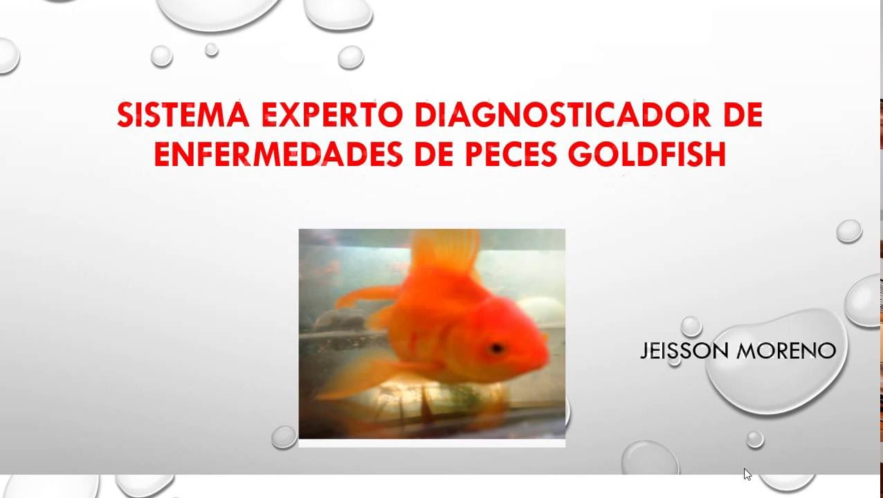 Sistema experto diagnosticador de enfermedades goldfish for Enfermedades de peces goldfish