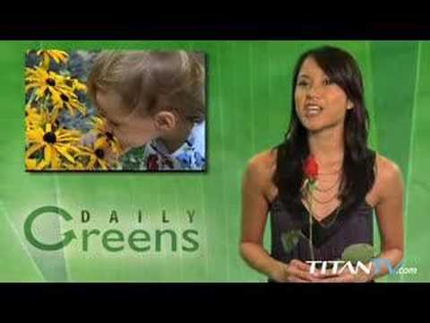 Daily Greens -- Eco-News with a Side of Sass