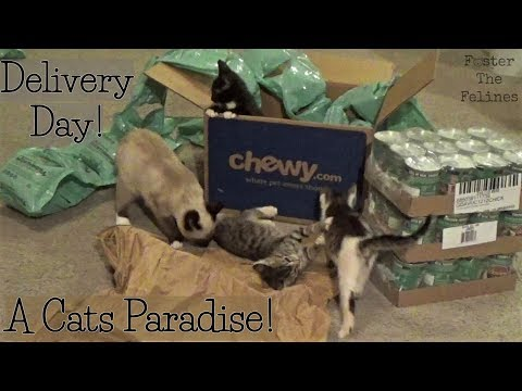 Kittens Playing In Boxes ~ Shady Nelly & Outkast ~ Foster Litter #26 ~ Adopted!