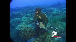 Spearfishing, the underwater fishing adventure