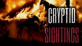 25 TRUE Scary Cryptid Stories