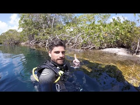 We MET A CROCODILE DIVING in MEXICO - Vlog 011