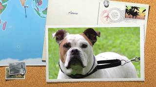 Aldens Kennels Dog Boarding Spring Grove, IL