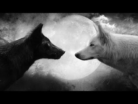 Как появились волки