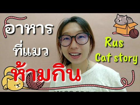 อาหารที่แมวห้ามกิน Food that cats should not eat อาหารที่คนกินได้แต่อันตรายสำหรับแมว | Cat story |