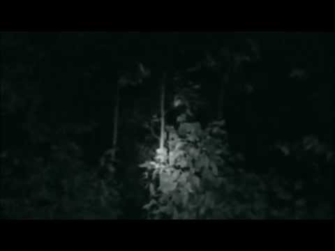 Real Alien Caught on in the Woods - YouTube Real Alien Footage 2013