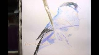 Видео урок Как нарисовать птичку цветными карандашами
