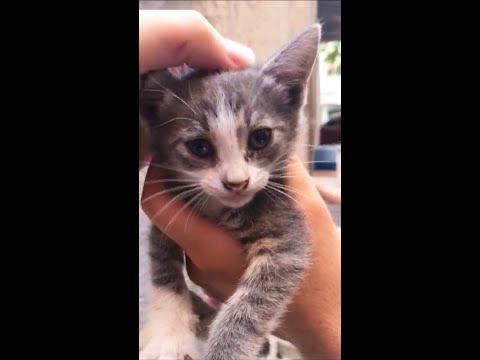 Cute Kitten Meowing - Cat Sound l Baby Kitten Playing Game