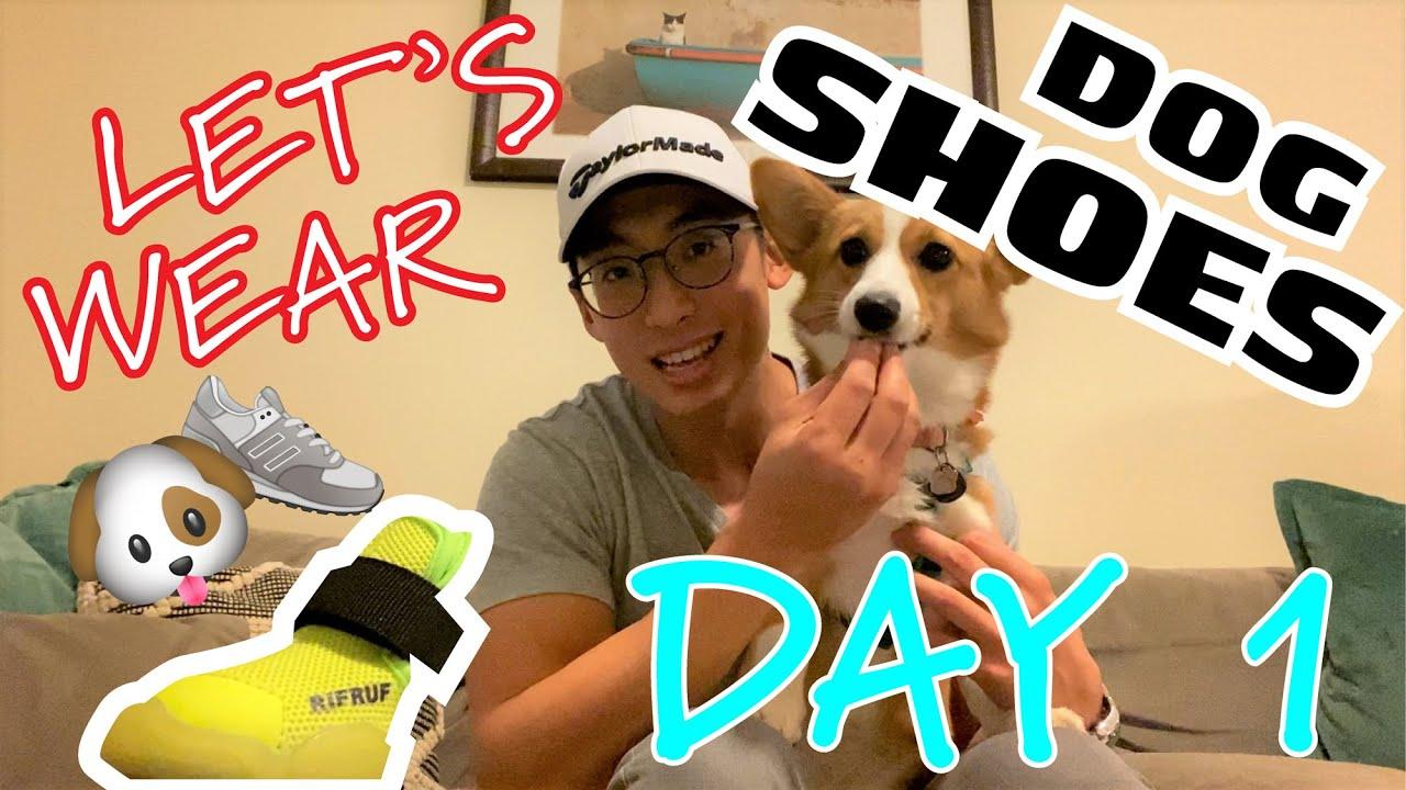 Dog Shoe Training, Part 1