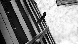 HAAST EAGLE flying over Wellington (Australian mega fauna Project)