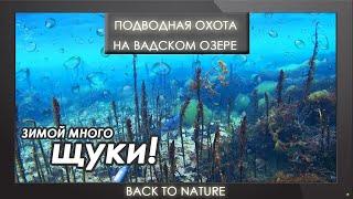 Зимняя подводная охота на озере