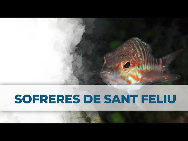 2 Little Divers | Sofreres de Sant Feliu