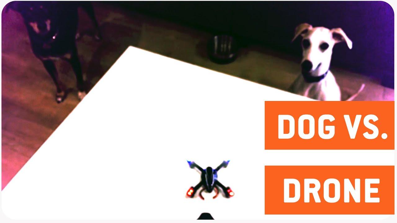 Dog Ruins Drone's Maiden Flight | Quadcopter vs. Dog