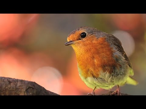 """Peaceful Relaxing Instrumental Music, Meditation Calm Music """"Meadow Birds"""" By Tim Janis"""